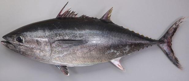 f:id:familyfishing:20190719122753j:plain