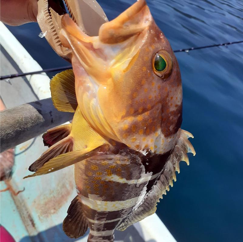 f:id:familyfishing:20190802185318j:plain