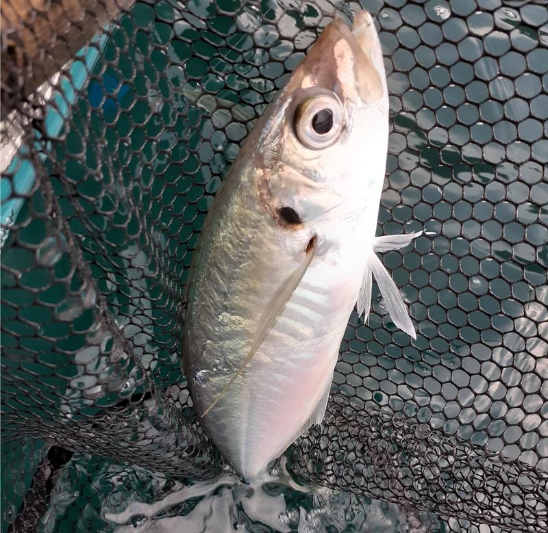 f:id:familyfishing:20190802185336j:plain