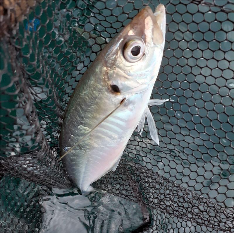 f:id:familyfishing:20190802185350j:plain
