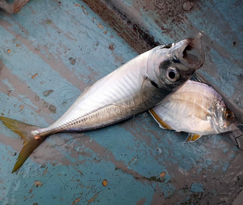 f:id:familyfishing:20190802185406j:plain