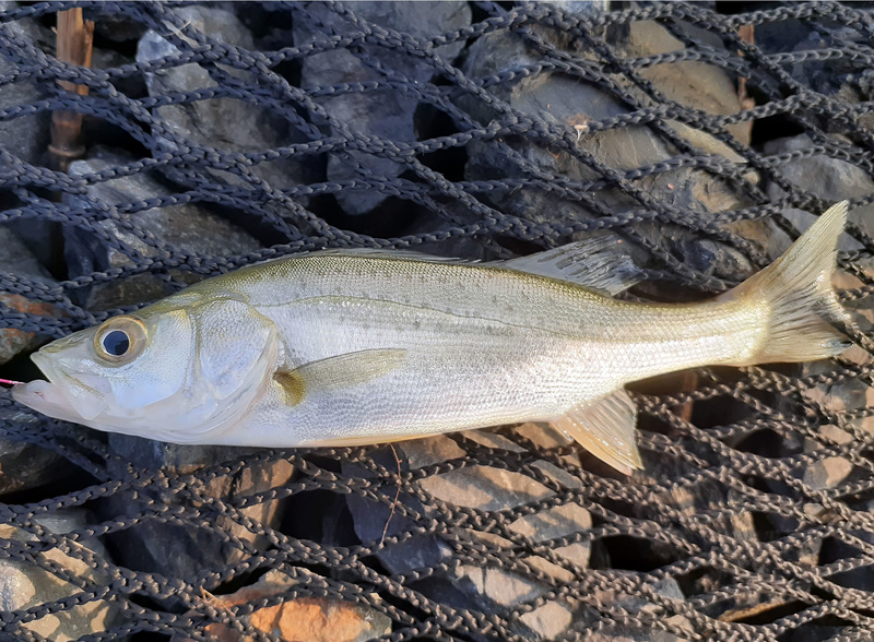 f:id:familyfishing:20190819071628j:plain