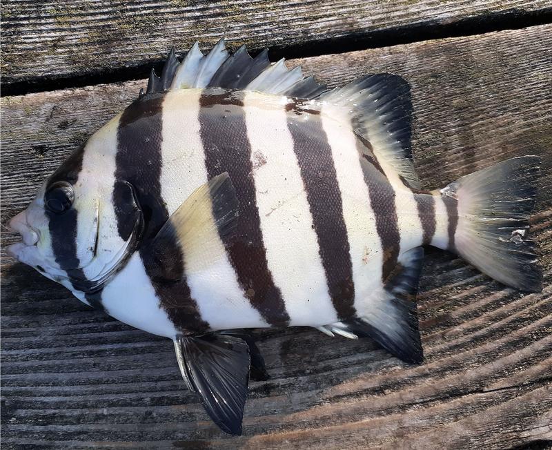 f:id:familyfishing:20190819235534j:plain