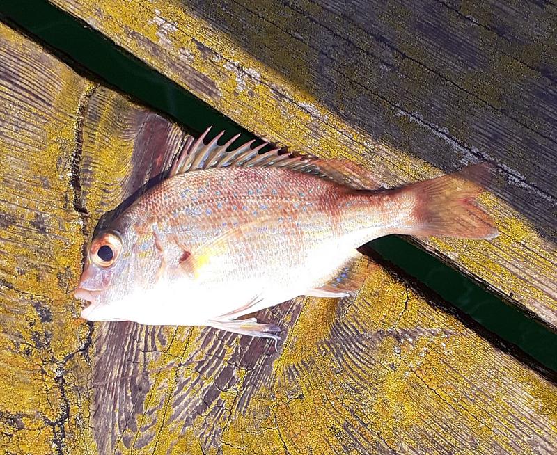 f:id:familyfishing:20190819235615j:plain