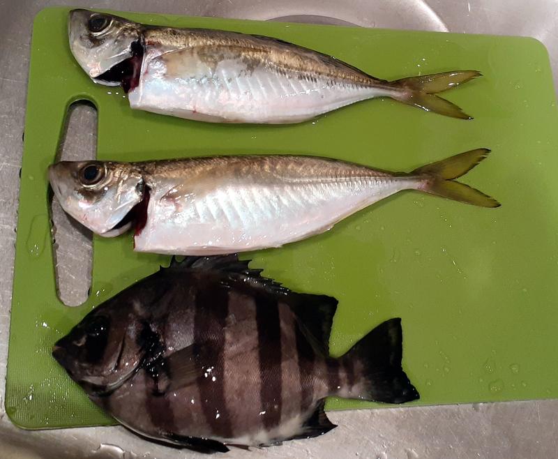 f:id:familyfishing:20190819235641j:plain