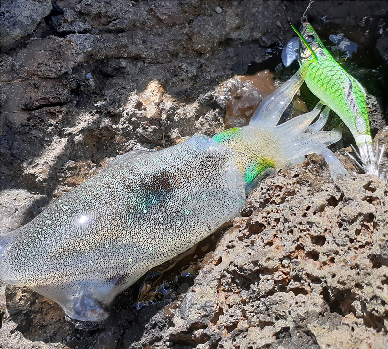 f:id:familyfishing:20190908222001j:plain