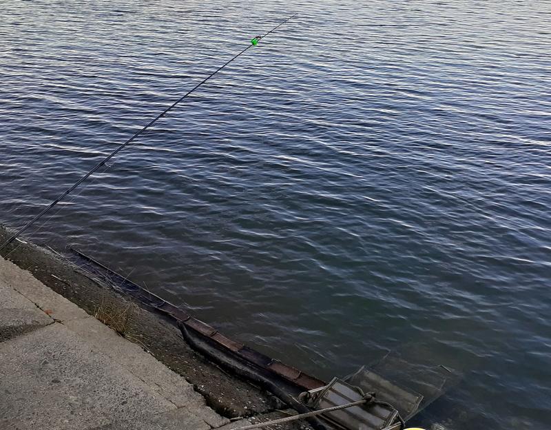 f:id:familyfishing:20191023000551j:plain