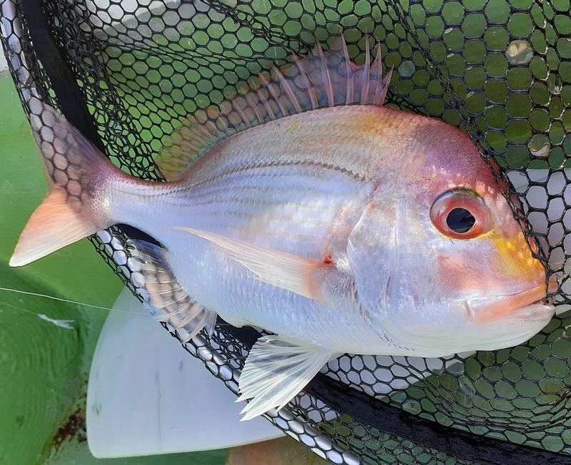 f:id:familyfishing:20191110224759j:plain