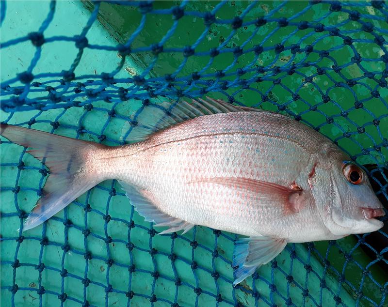 f:id:familyfishing:20191122204742j:plain