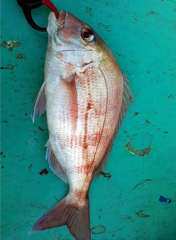 f:id:familyfishing:20191122204748j:plain