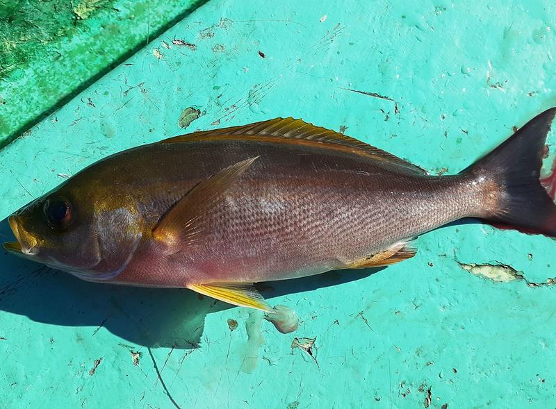 f:id:familyfishing:20191122205055j:plain