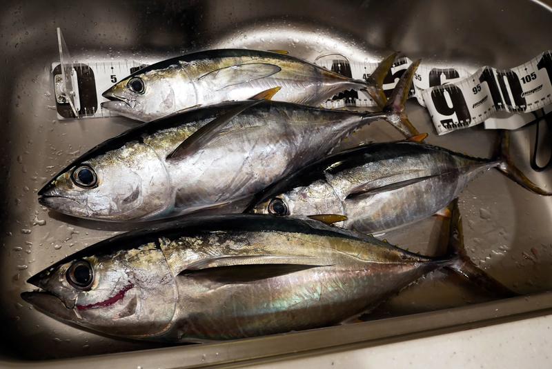 f:id:familyfishing:20191124221602j:plain