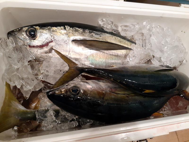 f:id:familyfishing:20191124221622j:plain