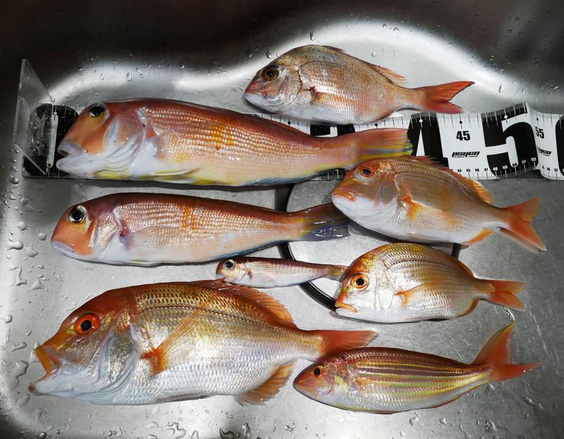 f:id:familyfishing:20200114220526j:plain