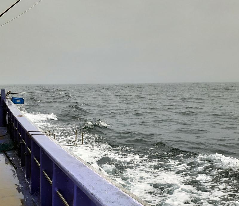 船釣りの波高