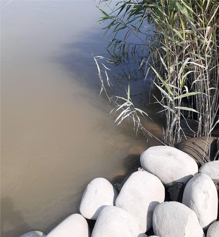 雨の後の濁りの入った木曽川で釣りをする