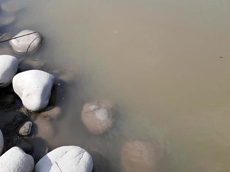 テナガエビはごろた石付近を好む