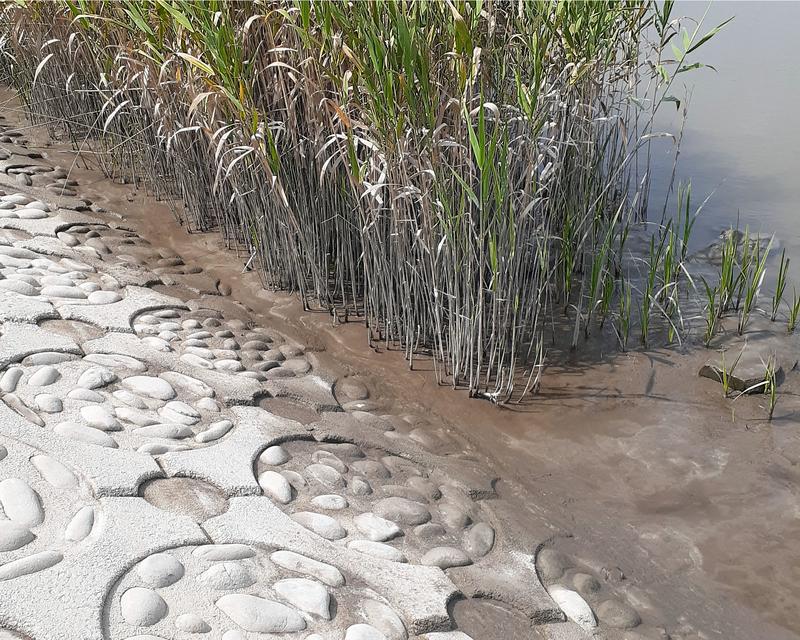 木曽川の三重県側のテナガエビ釣りのポイント