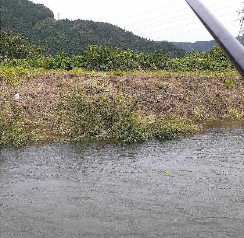 塩津大川で小鮎釣り