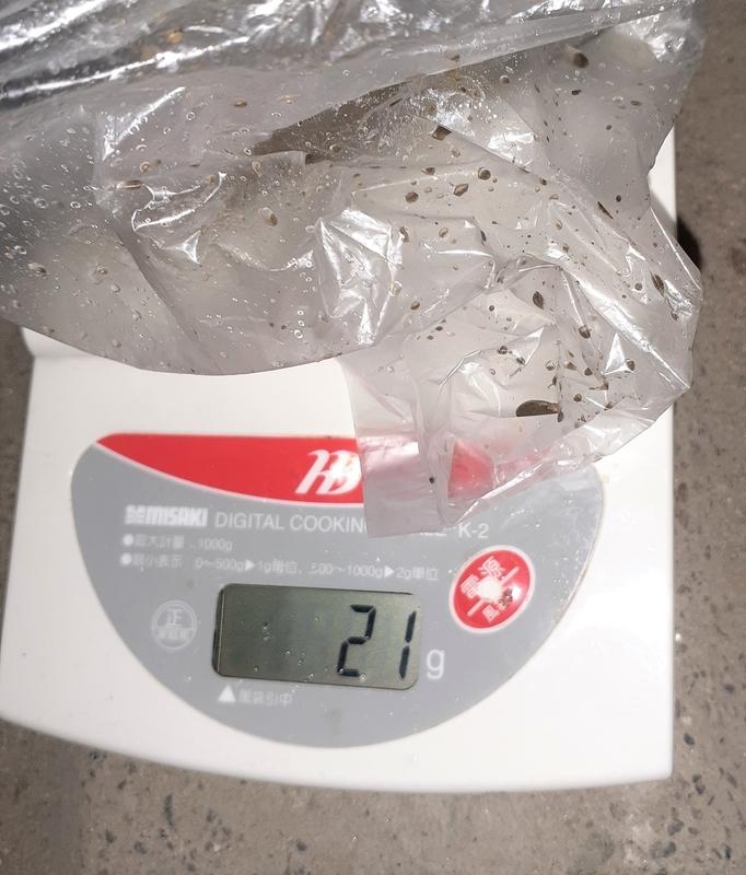 釣ったテナガエビの重量対決_2匹