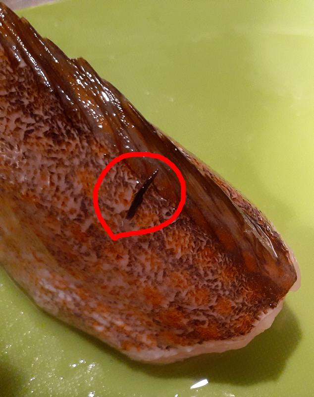 キジハタの寄生虫_名前はイカリムシ