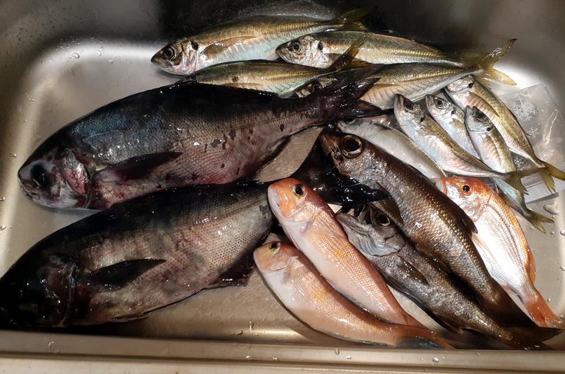 五目釣りの釣果