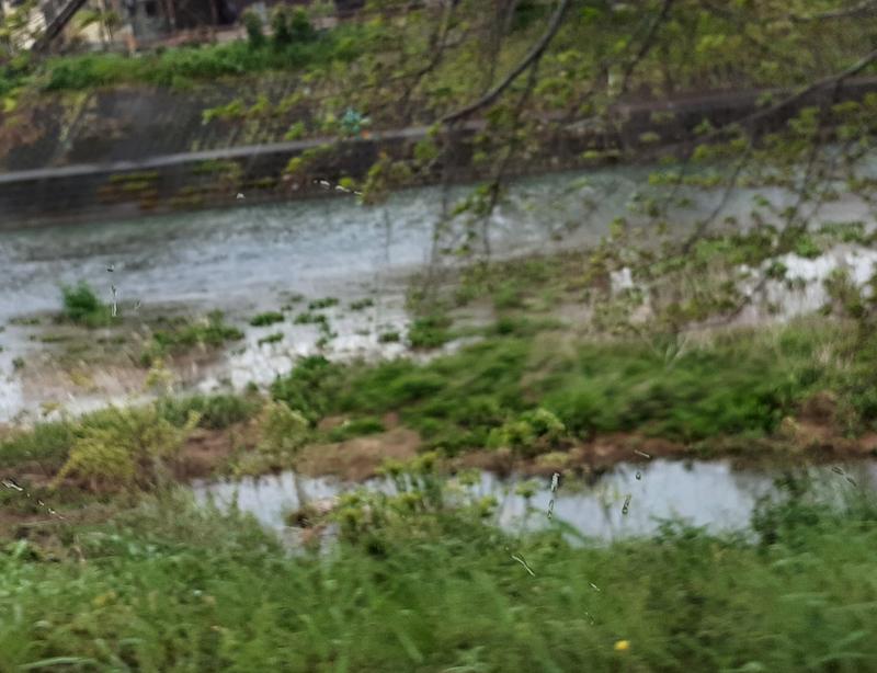 芹川で小鮎釣りをする人