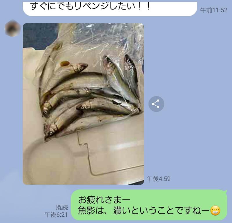 琵琶湖の芹川で小鮎釣り