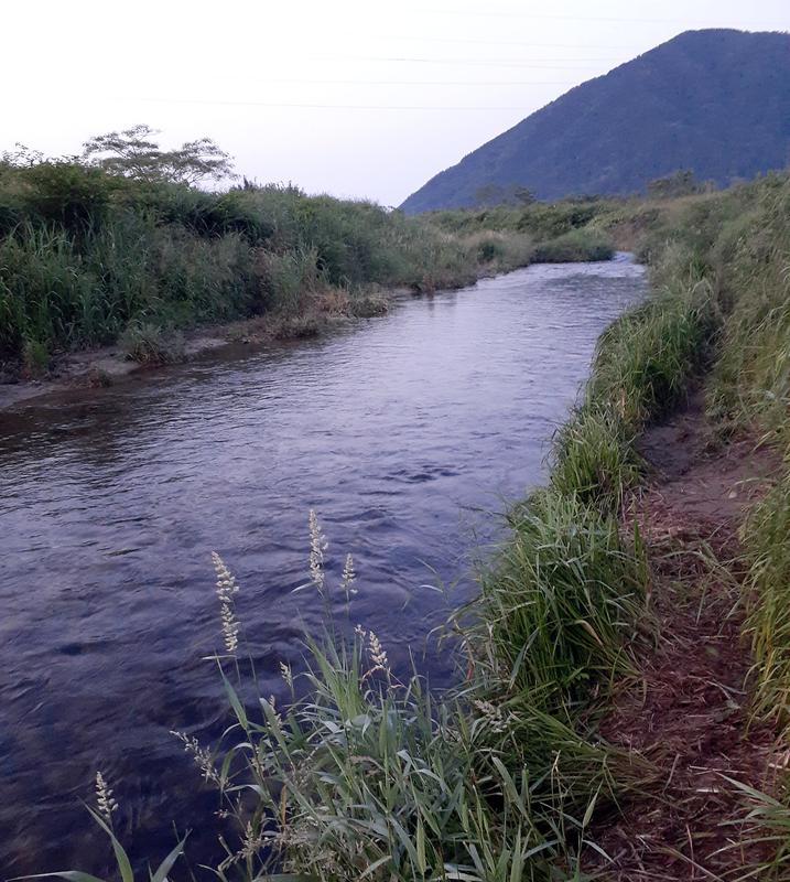 琵琶湖の湖北の塩津大川で小鮎釣り