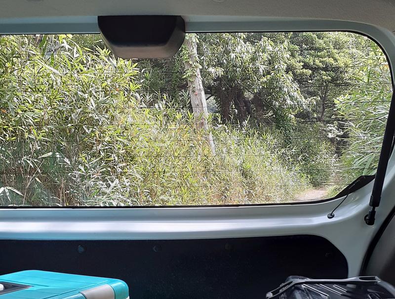 密林の中を進む車