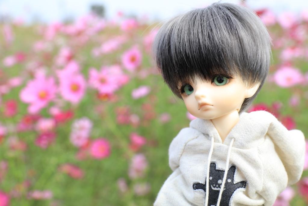 f:id:fantan74:20161015033657j:plain