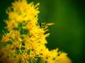 [花][クロスプロセス]背高泡立草