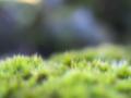 [植物][ファンタジックF]苔