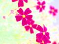 [花][ウォーターカラー]バーベナ・ペルウィアナ