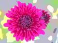 [花][リーニュクレール]ロリポップレッド