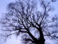 [風景][ジオラマ]木