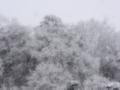 [風景][ファンタジックF]雪