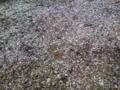 [風景]ちょい雪
