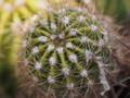 [植物]サボテン