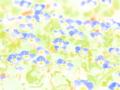 [花][ウォーターカラー]オオイヌノフグリ