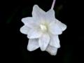[花][ノンフィルター]紫陽花