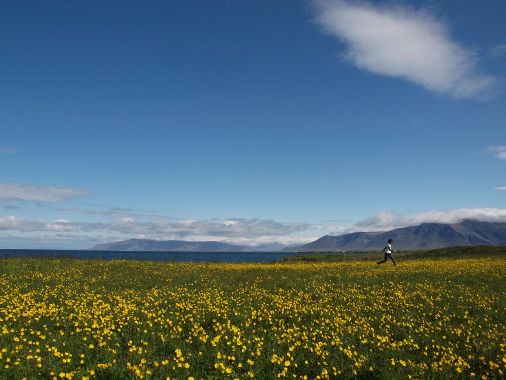 ピースボート アイスランド お花畑