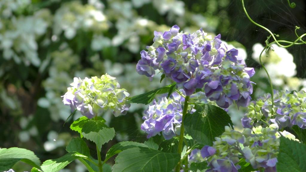 四国 高知 牧野植物園 花