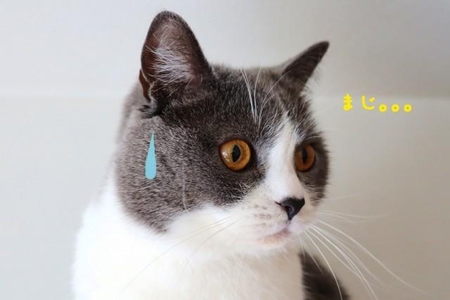 がっかりした猫