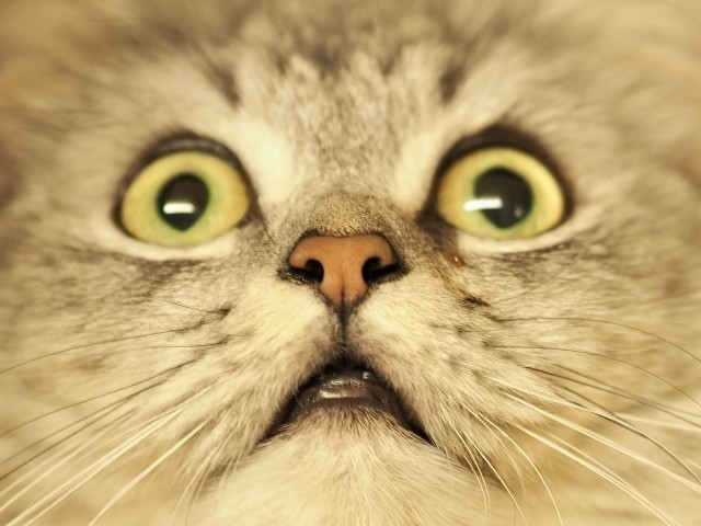 ネコが驚く