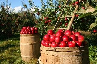 りんご ダイエット方法