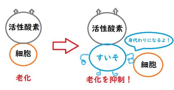 抗酸化作用 水素のめぐり湯 水素