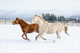 競馬 氷まつり