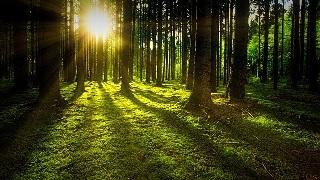 森 心の癒し