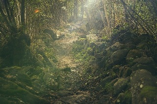 森林 爽快感